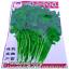 เมล็ดผัก ชี (ชนิดซอง) thumbnail 1