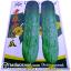 เมล็ดผัก แตงกวา (ชนิดซอง) thumbnail 1
