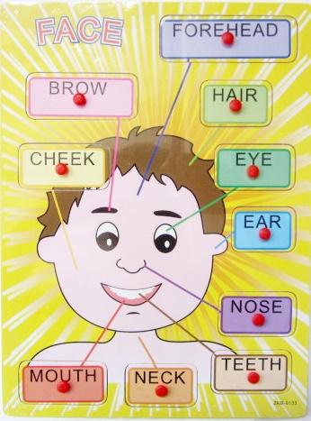 แผ่นไม้เสริมพัฒนาการเรียนรู้ร่างกายภาษาอังกฤษ