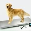 เครื่องชั่งน้ำหนักสัตว์เลี้ยง max 300kg0.1kg 52x114cm (NS-PS2)