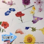 Early Learning Flash Cards - Flowers