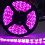 ไฟริบบิ้นสีชมพู LED 60 ดวง 5M 12V