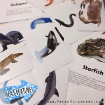 Early Learning Flash Cards - Sea Creatures