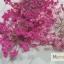 ดอกไม้แห้ง เป็นช่อ 12 สี thumbnail 7