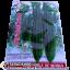 เมล็ดผัก บวบเหลียม-ยาว (ชนิดซอง)