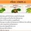 อัมรันต์ ตรีผลา AMARUN TRIPLA ลดเบาหวาน ต้านมะเร็ง รักษาภูมิแพ้ สร้างสมดุลย์ให้ร่างกาย thumbnail 4
