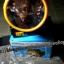 ไฟฉายคาดหัว LED 1 ดวงสีขาว 0.7W ชาร์จไฟบ้าน YG3599จำนวน80ชิ้น/ลัง thumbnail 5