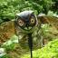 หุ่นนกฮูกยักษ์ทนแดดทนฝน สำหรับไล่นก thumbnail 5