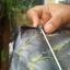 ว่าวนกอินทรีย์ 110x45 cm thumbnail 7