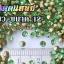 เพชรตูดแหลม สีเขียว ซองเล็ก เลือกขนาดด้านในครับ thumbnail 4