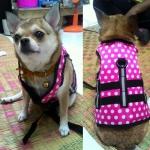 รีวิวเสื้อชูชีพสุนัขแบบเสื้อกล้าม