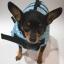 เสื้อชูชีพสุนัขแบบโฟมรอบตัว เบอร์ S thumbnail 7