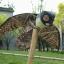 หุ่นนกฮูกยักษ์ทนแดดทนฝน สำหรับไล่นก thumbnail 6