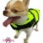 เสื้อชูชีพสุนัข Dogtalog แบบมีรองคอถอดได้ : สีเขียว thumbnail 6